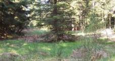 valorisation du massif du Bois de Bramard